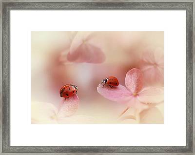 Ladybirds On Pink Hydrangea. Framed Print