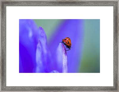 Ladybug Adventure Framed Print by Priya Ghose