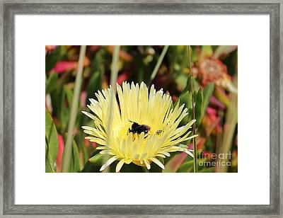 Ladybug And A Bumblebee Framed Print
