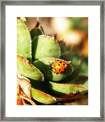 Ladybug And Chick Framed Print by Chris Berry