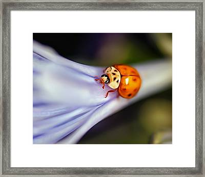 Ladybug Art Framed Print by Tammy Smith