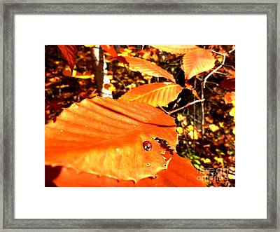 Ladybug At Fall Framed Print