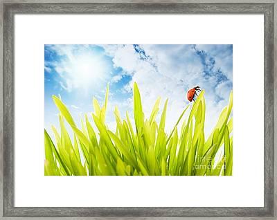 Ladybug Framed Print by Boon Mee