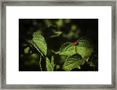Ladybug Framed Print by Bradley R Youngberg