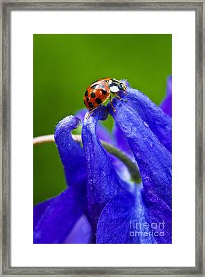 Ladybug Framed Print by Carrie Cranwill