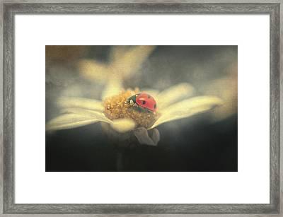 Ladybug Dream Framed Print by Taylan Apukovska