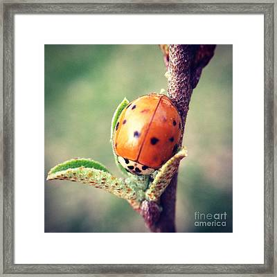 Framed Print featuring the photograph Ladybug  by Kerri Farley