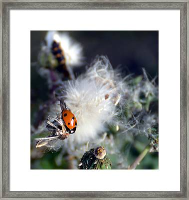 Framed Print featuring the photograph Ladybug by Linda Cox