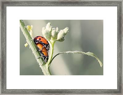 Ladybug Love Framed Print by Shoal Hollingsworth