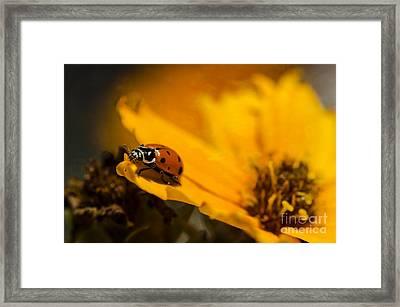 Ladybug Framed Print by Nicole Markmann Nelson