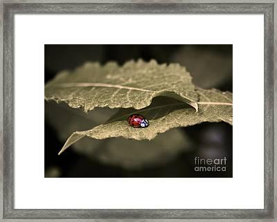 Ladybug Framed Print by Nora Blansett