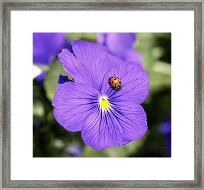 Ladybug On Flower Framed Print