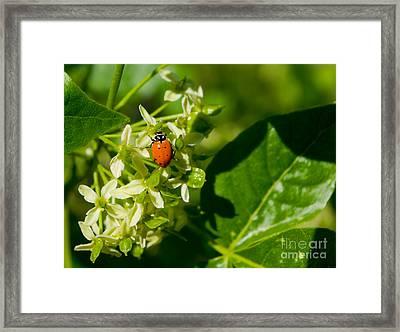 Ladybug On Flowers Framed Print