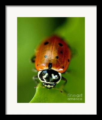 Red And Green Photographs Framed Prints