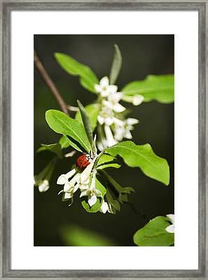 Ladybug And Flowers Framed Print by Christina Rollo
