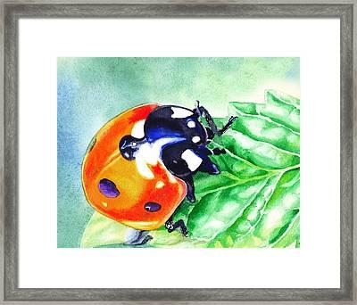 Ladybug On The Leaf Framed Print