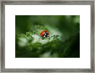 Ladybug On The Move Framed Print