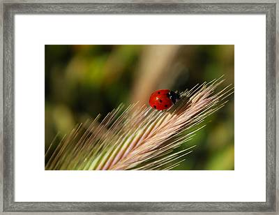 Framed Print featuring the photograph Ladybug by Richard Stephen