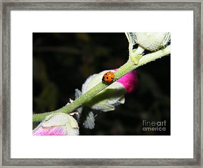 Framed Print featuring the photograph Ladybug Taking An Evening Stroll by Ann E Robson