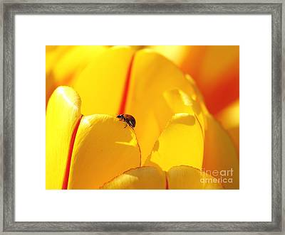 Ladybug - The Journey Framed Print