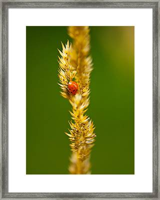 Ladybug Tucked In Framed Print by Sarah Crites