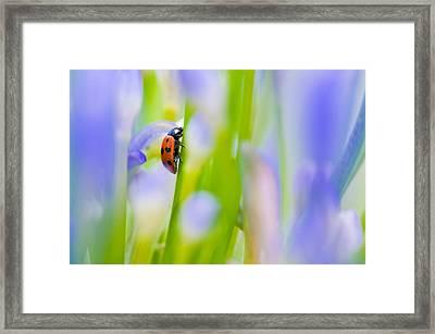 Ladybug Framed Print by Ulrich Schade