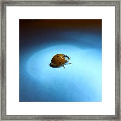 Ladybug Under Blue Light Framed Print