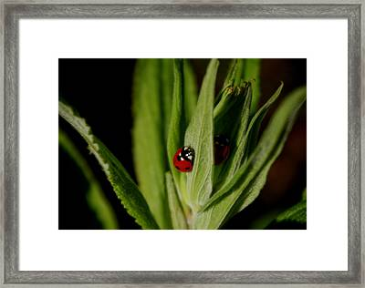 Framed Print featuring the photograph Ladybugs by Adria Trail