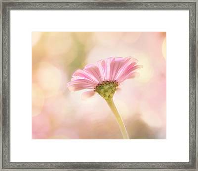 Ladylike Framed Print by Amy Tyler