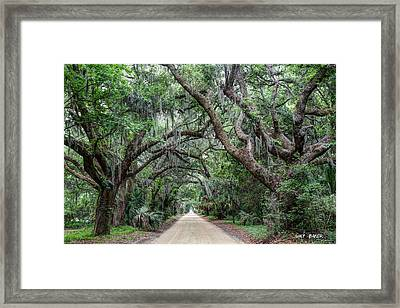 Lady's Island Framed Print by Walt  Baker