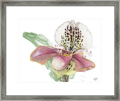 Ladys Slipper - Orchid 14 - Elena Yakubovich Framed Print