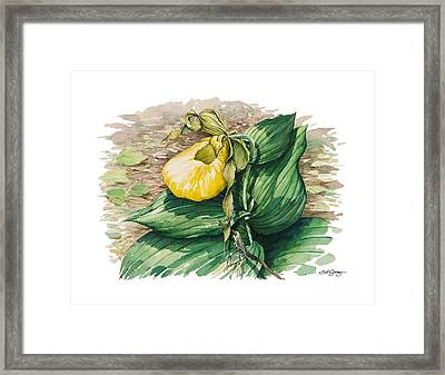 Framed Print featuring the painting Ladyslipper by Bob  George