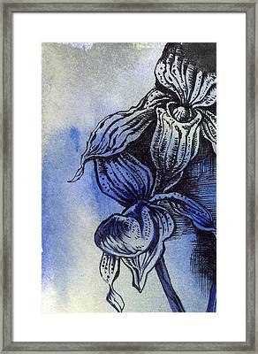 Ladyslipper In Blues Framed Print by Alfred Ng