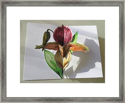 Ladyslipper Pop Up Card Framed Print