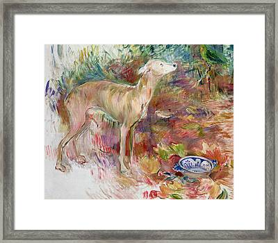 Laerte The Greyhound Framed Print