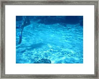 Lagoon Dive Cook Islands Framed Print by Amanda Holmes Tzafrir