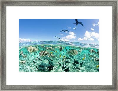 Lagoon Safari Trip Featuring Stingrays Framed Print