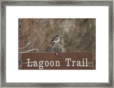 Lagoon Trail Gatekeeper Framed Print