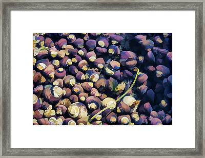 Laguna Beach Tide Pool Pattern 1 Framed Print