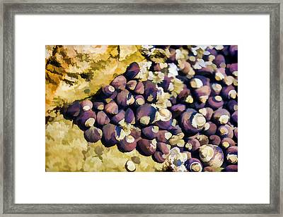 Laguna Beach Tide Pool Pattern 2 Framed Print by Scott Campbell
