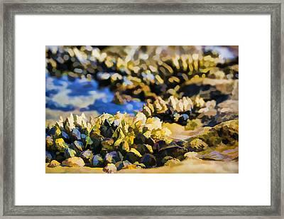 Laguna Beach Tide Pool Pattern 4 Framed Print by Scott Campbell