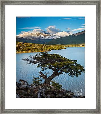 Laguna Capri Tree Framed Print by Inge Johnsson