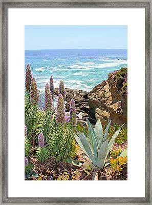 Laguna Coast With Flowers Framed Print