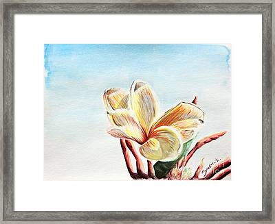 Laguna Flower Framed Print by Katharina Filus