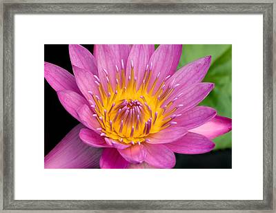 Framed Print featuring the photograph Lahaina Lily  by Hawaii  Fine Art Photography