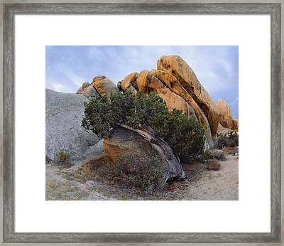 Laid Back Juniper Framed Print