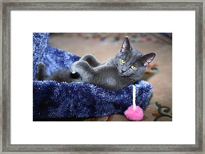 Laid Back Framed Print by Sally Weigand