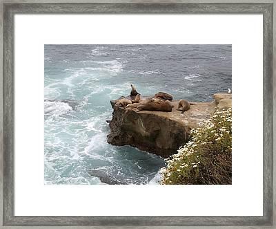 Lajolla Cove 2 Framed Print