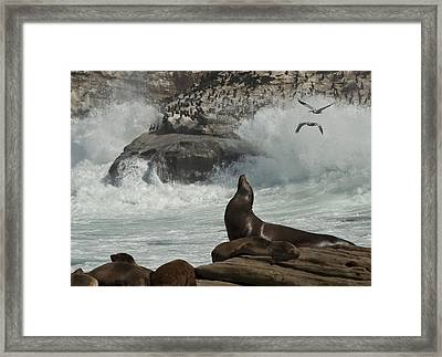 Lajolla Surf N Nature Preserve Framed Print by Daniel Hebard