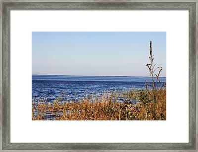 Framed Print featuring the photograph Lake Apopka 2 by Chris Thomas